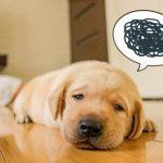 下痢に悩む犬