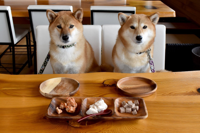 犬の食材選び