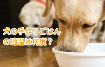 犬の手作りごはんの温度、適温は何度?